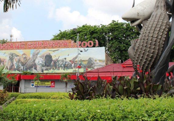 Rekomendasi Tujuan Wisata Edukasi di Surabaya yang Wajib Dikunjungi
